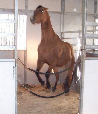 Horses in stalls and confinement or indoor riding only can exhibit poor behavior